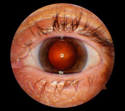 diagnostic ophthalmology clinic medic jukic